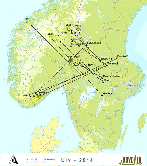 ulv kart Svenske ulver vandrer til Norge ulv kart