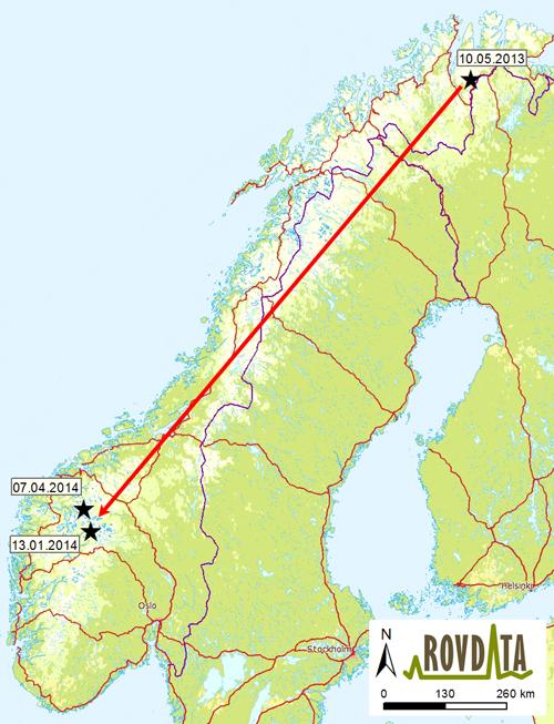 kart over tana Tanajerv gikk nesten Norge på langs kart over tana