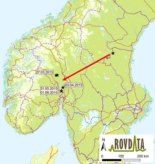 gran hadeland kart Har påvist genetisk viktig ulv i Nordmarka gran hadeland kart