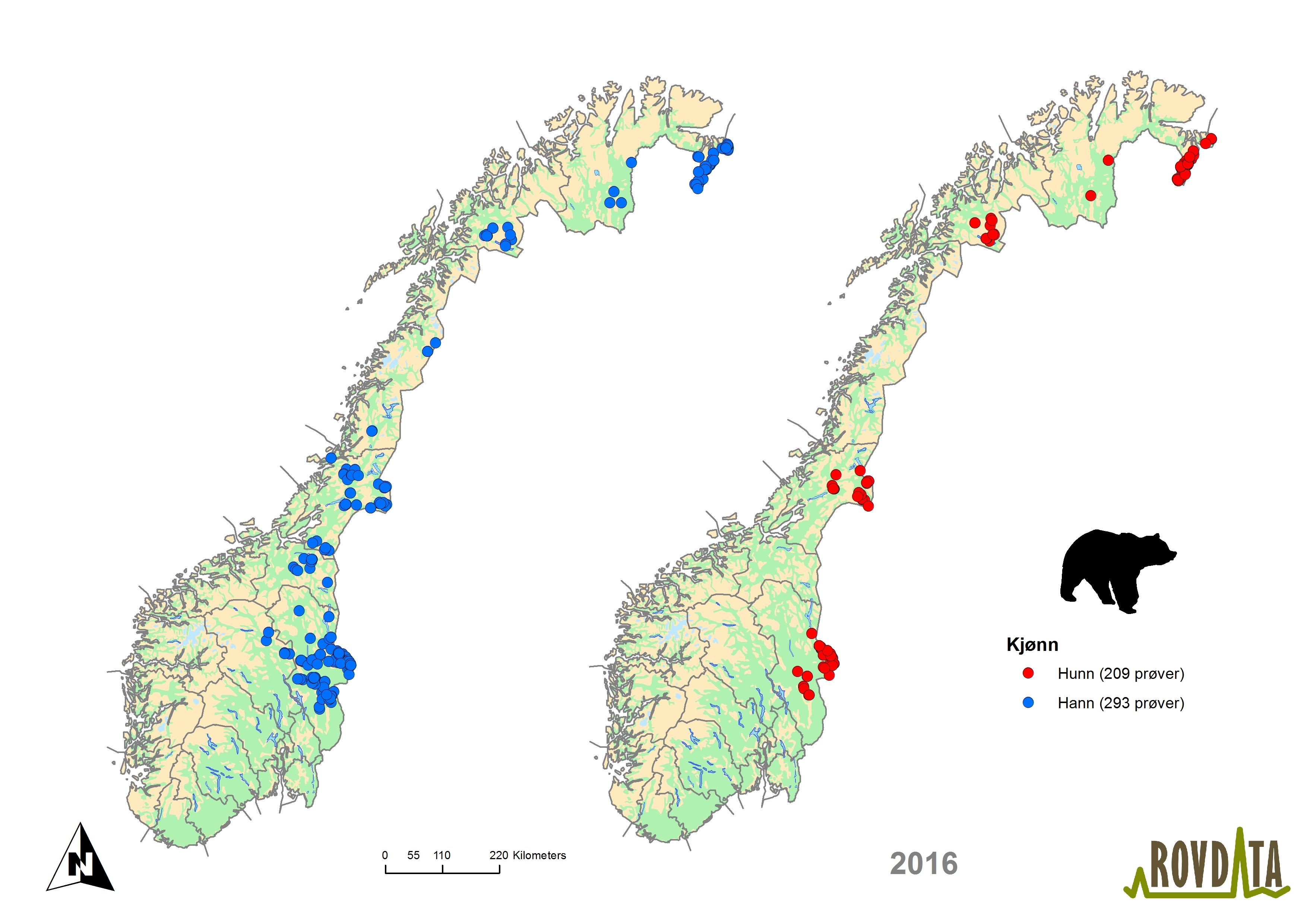digitalt kart norge Rovdata   Last ned kart og figurer, brunbjørn digitalt kart norge
